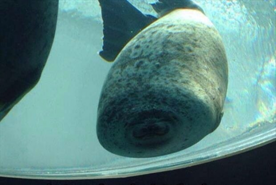 Seal running into glass will never not be funny.